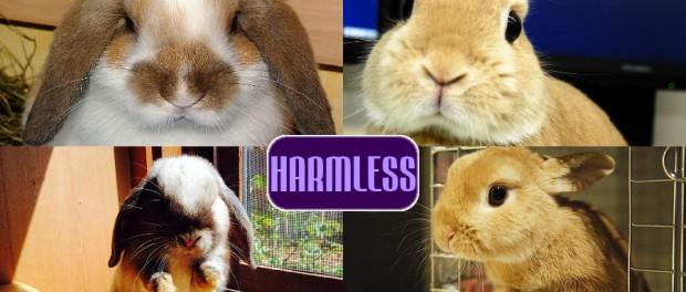 harmless dwarf bunnies